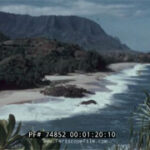 74852 Holiday In Hawaii Contrast
